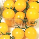 yellowcarol