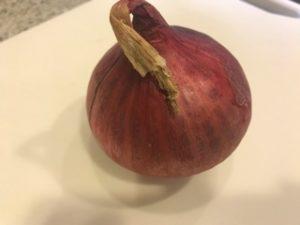 1か月保存した紫玉ねぎ